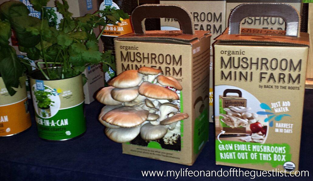 Back_to_the_Roots_Mushroom_Mini_Farm_www.mylifeonandofftheguestlist.com