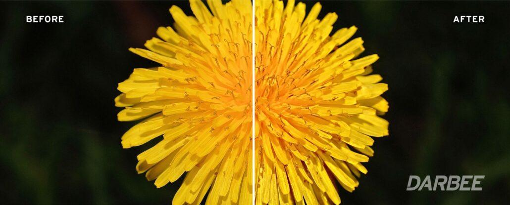 dandelion+sidebysidefullpop100
